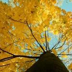 Jesień nad Głeboczkiem w Tucholi-11