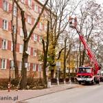 przycinanie drzew ul. Pocztowa Tuchola 2012-3