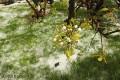 wiosna przyszła