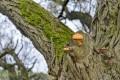 grzyby na drzewie-1697