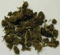 marihuana (fot. wikipedia)