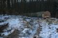 Żółwiniec zginął pilarz 2.02.2015 (fot. KPP Tuchola)