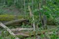 Zniszczenia w Leśnictwie Świt po nawałnicach 03.07.2016-3