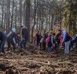 Sadzenie drzewek Łoboda gm. Śliwice 8.04.2017-10