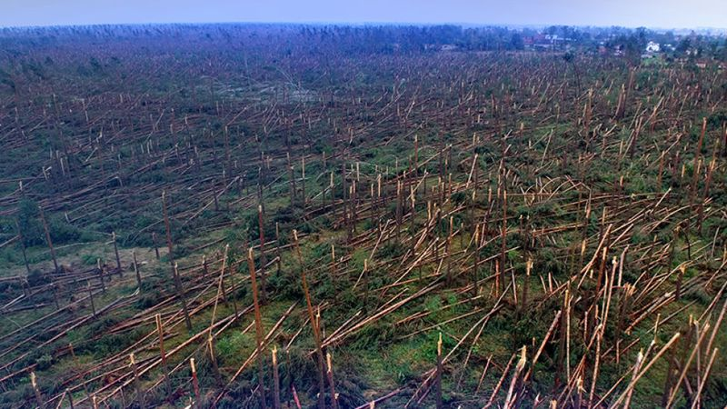 las, źródło - UG Gostycyn
