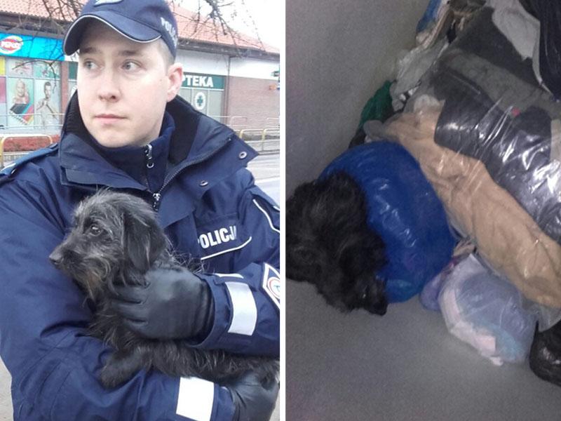 Pies wyrzucony do pojemnika na odzież 02.2018 fot. KPP Tuchola