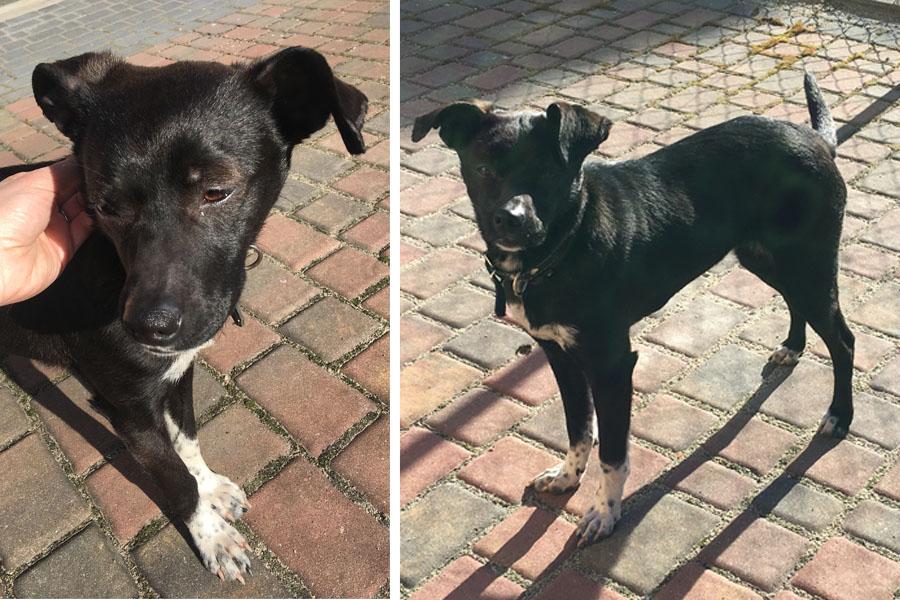 Znaleziony pies Tuchola koło szpitala 04.2018
